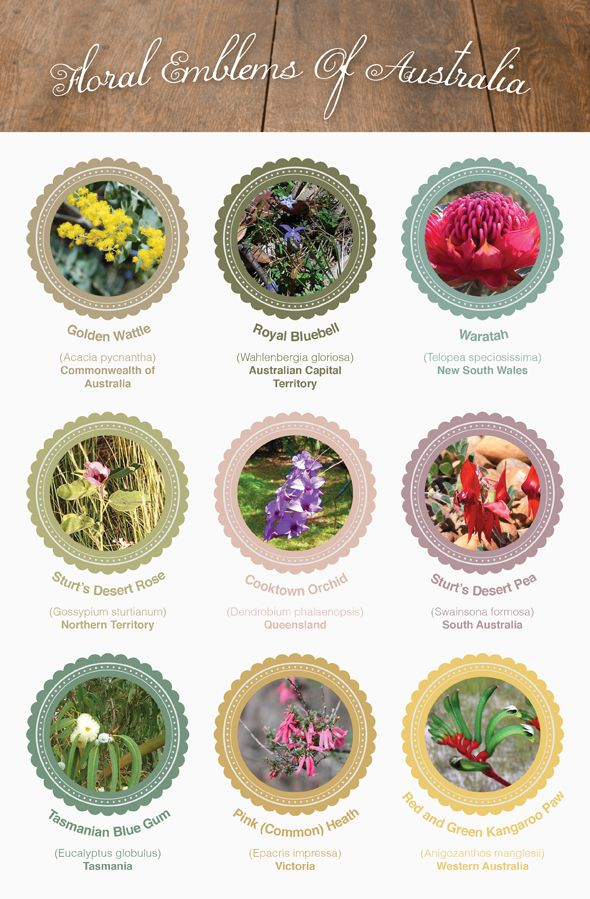 Gorgeous Australian blooms can be the perfect addition to your wedding bouquet. Find inspiration for your native wedding flowers here with a guide to Australian flower emblems for the brides wedding bouquet or table flowers!