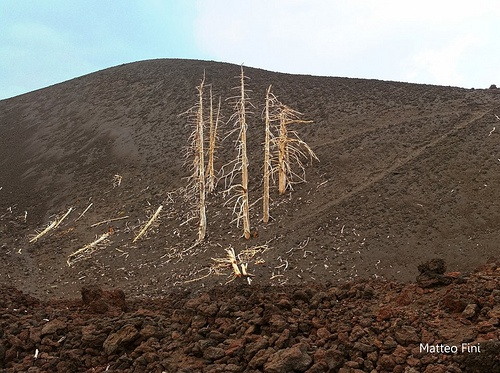 Trees destroyed by Etna Volcano