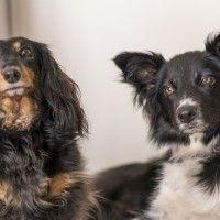 #dogalize Come prendersi cura del cane a pelo lungo #dogs #cats #pets