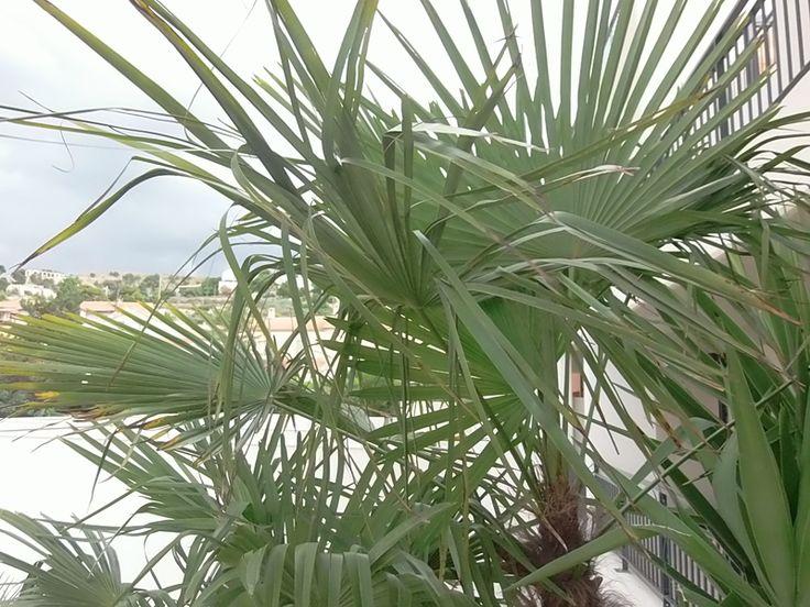 Les 25 meilleures id es de la cat gorie entretien palmier for Entretien jardin marseille