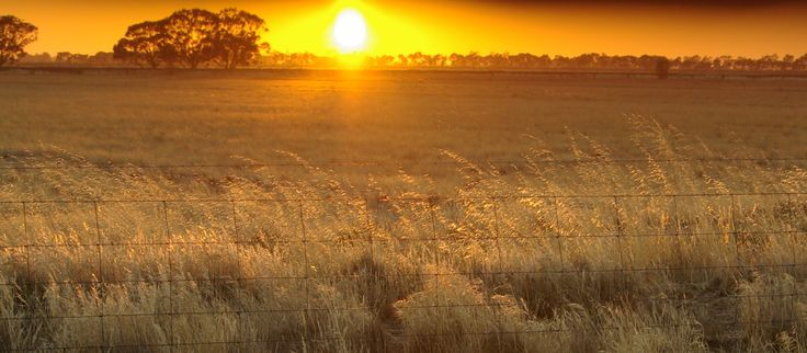 Early morning scene on the road to Swan Hill