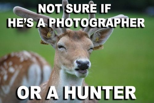 Not sure if photographer, or hunter.