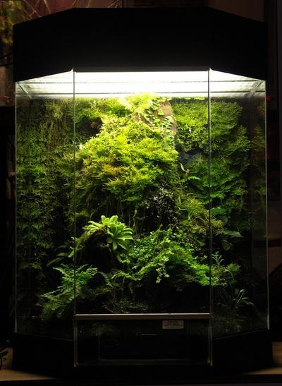 fantastic vivarium planted with moss and carnivorous plants