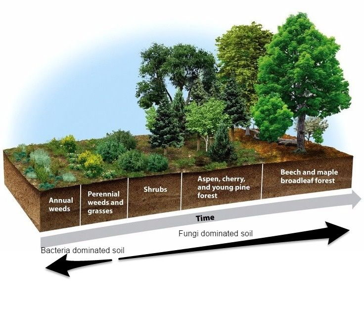 ****This one**** The Definitive Guide to Building Deep Rich Soils by Imitating Nature ***Also Food Forest, and downloadable free ebook.