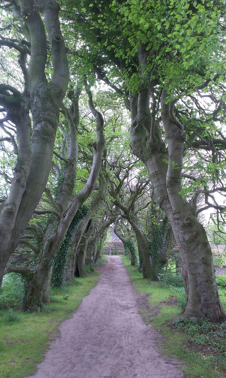 Trees castle garden Amerongen, the Netherlands