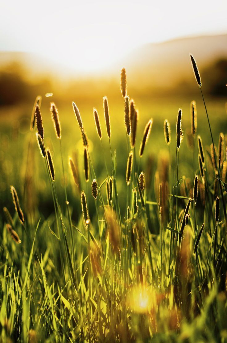 280 best sunkissed images on pinterest sunlight autumn for Pretty grass