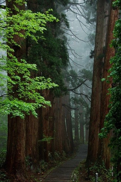 Beautiful forest trail - Japan