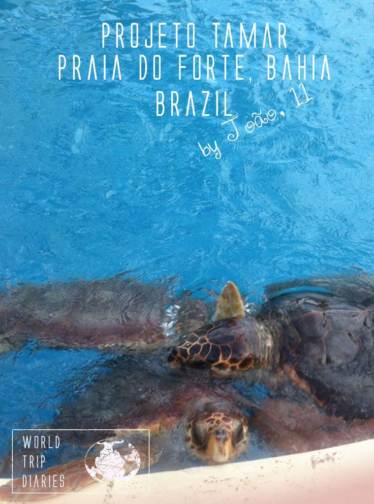 A visit to on NGO that helps Sea Turtles in Brazil, by João (11 years old) - World Trip Diaries