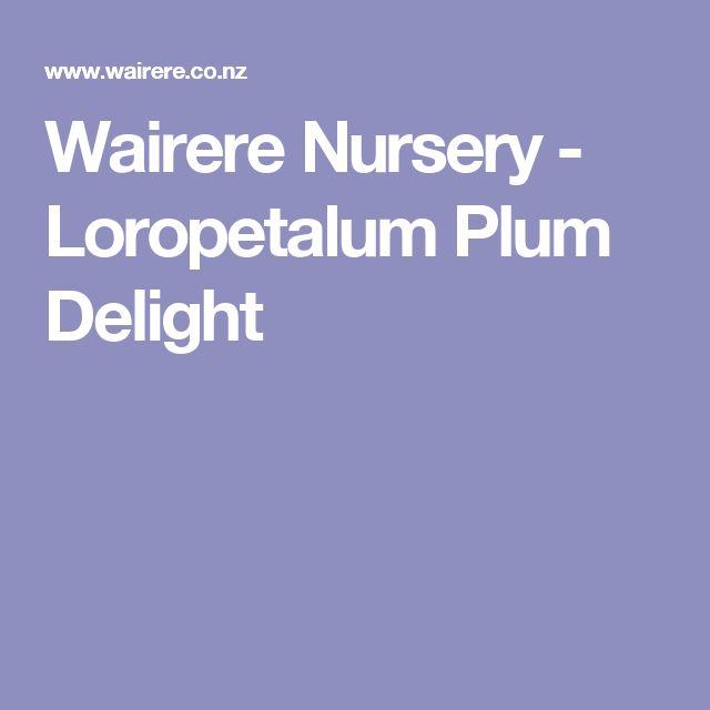 Wairere Nursery - Loropetalum Plum Delight