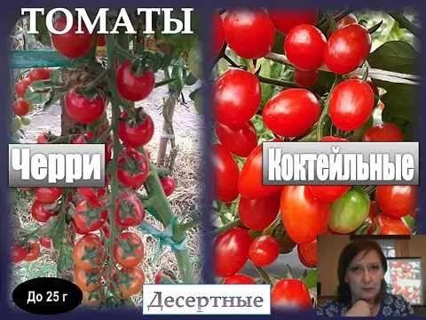 Томатные хитрости (всё о выращивании томатов)
