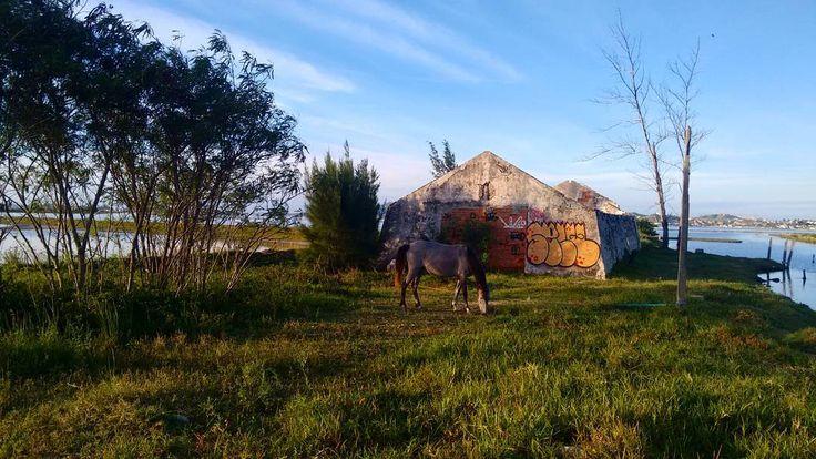 Estrada Perynas   Cabo Frio, RJ / BRASIL   photo by Rachel Monteiro (@/qchelq on Instagram). #horse #salina #salinas #cavalo #lagoa #lago #laguna #lake #lagoon #paradise #paraíso #sun #road #street #roadtrip #cabofrio #rj #rio #riodejaneiro #brasil #brazil #vacation #sky #blue #bluesky