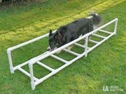 Ladder exercise, increases paw awareness. If they are conscious of their feet positioning during agility, it helps with a number of obstacles. Especially valuable for stability on contacts and clearing jumps/hurdles.