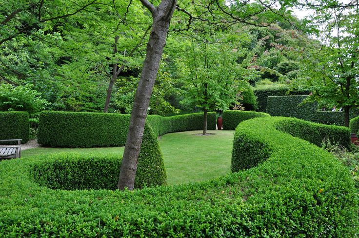 Buxus garden in Castillon