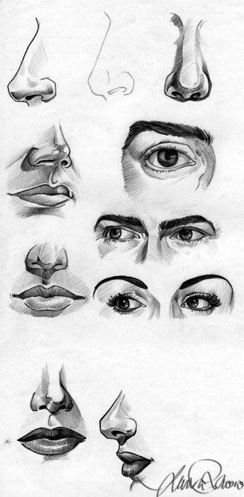 http://fc00.deviantart.net/images2/i/2004/05/0/e/Human_Face_Sketches_II.jpg