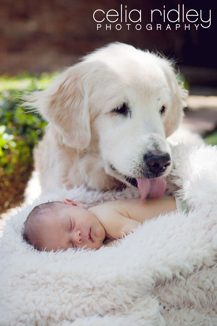 Sweet Puppy Kisses