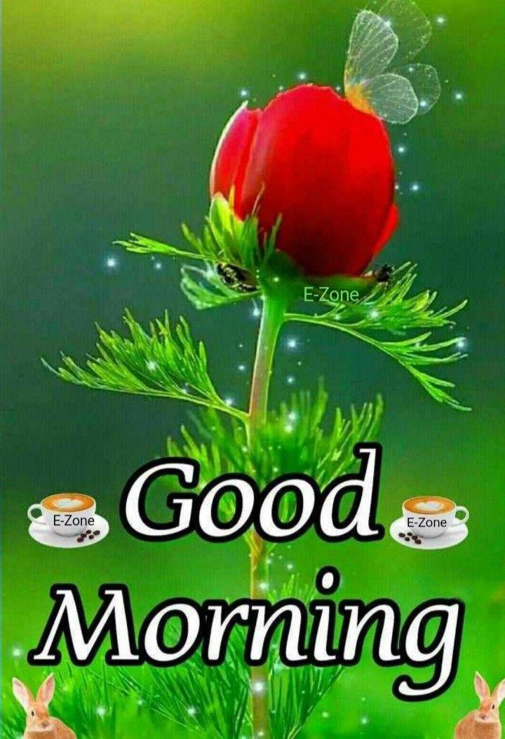 Pin By Vinodyadav On Good Morning Good Morning Flowers Good Morning Video Songs Lovely Good Morning Images
