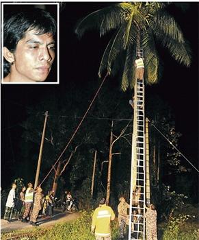 Anggota bomba menyelamatkan Mohd Hafiz (gambar kecil) yang tersangkut atas pokok kelapa di Pasir Puteh.