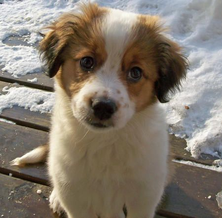 Saint Bernard/Border Collie Mix - that would be the perfect dog! Big AND fluffy!