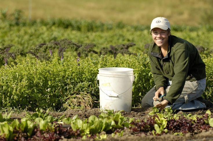 GAP Bölge Kalkınma İdaresi Başkanlığı, bölgenin organik tarım için bir vadi haline getirilmesi için atağa geçti.