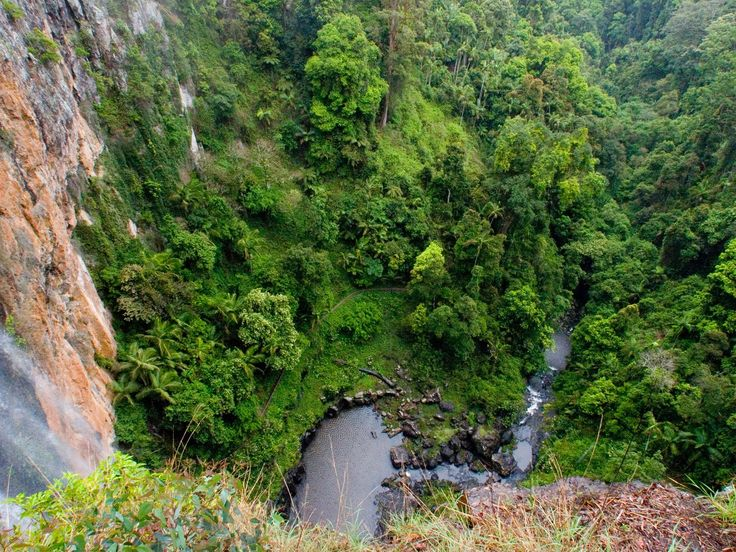 Spectacular waterfalls and cool ancient forests await you in the beautiful World Heritage-listed Gondwana rainforest of Springbrook National Park.