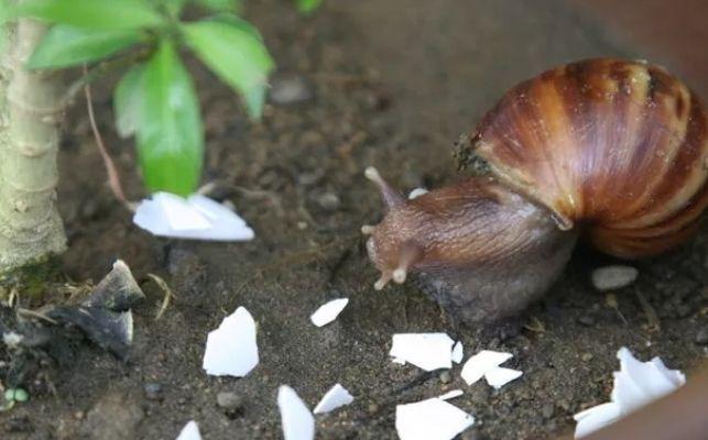 О пользе яичной скорлупы в быту