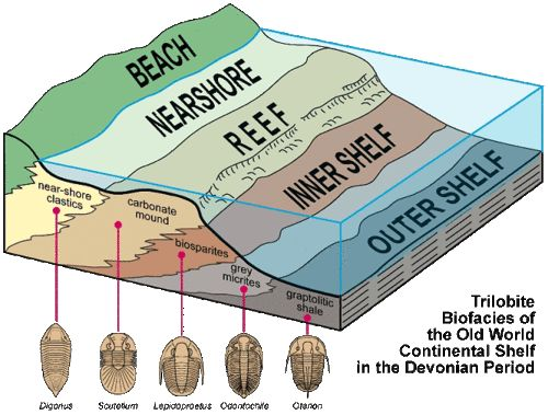 Trilobite Biofacies of the Old World Continental Shelf in