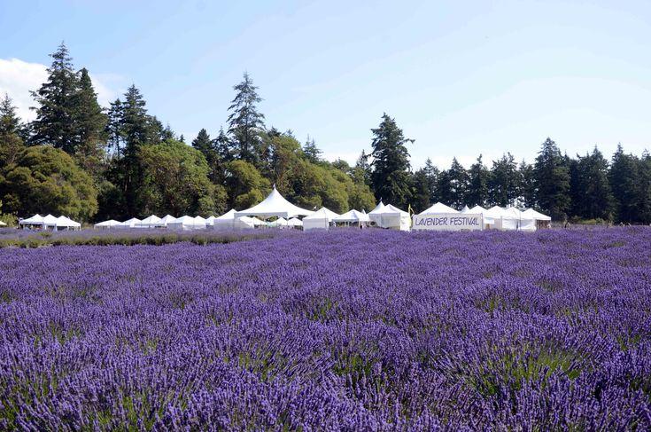 San Juan Island Lavender Festival