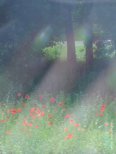 Flores que crecen en la naturaleza son mucho más bonitas que las que crecen en la ciudad.  http://www.bravereaders.es/hacia-rutas-salvajes-un-libro-escapista/