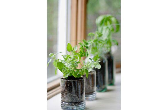Mini-Horta - Veja modelos de Mini-Horta para a casa