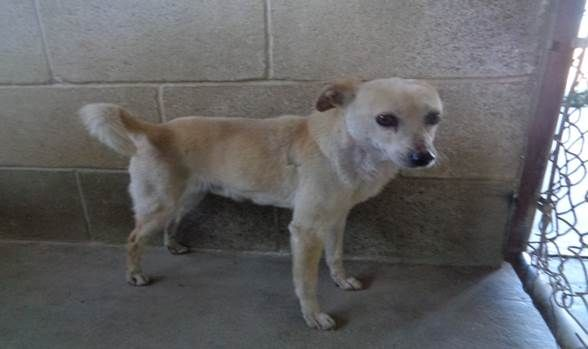 ***SUPER SUPER URGENT!!!*** - PLEASE SAVE SKINNER!! - EU DATE: 6/22/2015 -- Skinner (05012015c-D04) Breed:Terrier (mix breed) Age: Adult Gender: Male Size: Small Special needs: hasShots, Shelter Information: Delano Animal Shelter 1525 Mettler Avenue Delano, CA Shelter dog ID: 05012015C-D04 Contacts: Phone: 661-721-3377 Name: Delano Animal Control email: SHELTER661@GMAIL.COM Read more at http://www.dogsindanger.com/dog/1433281140466#rGLz2gKrDk3EQ2pv.99