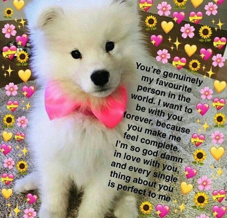 Pin by Della on Wholesome memes Cute love memes, Cute