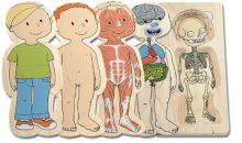 Uw kind leert met deze kwalitatief hoogwaardige puzzel op een speelse verantwoorde manier het menselijk lichaam kennen. In 5 lagen gaat de puzzel over van kinderskelet tot aangeklede jongen, ondertussen komen de organen, spieren en het lichaam aan bod.