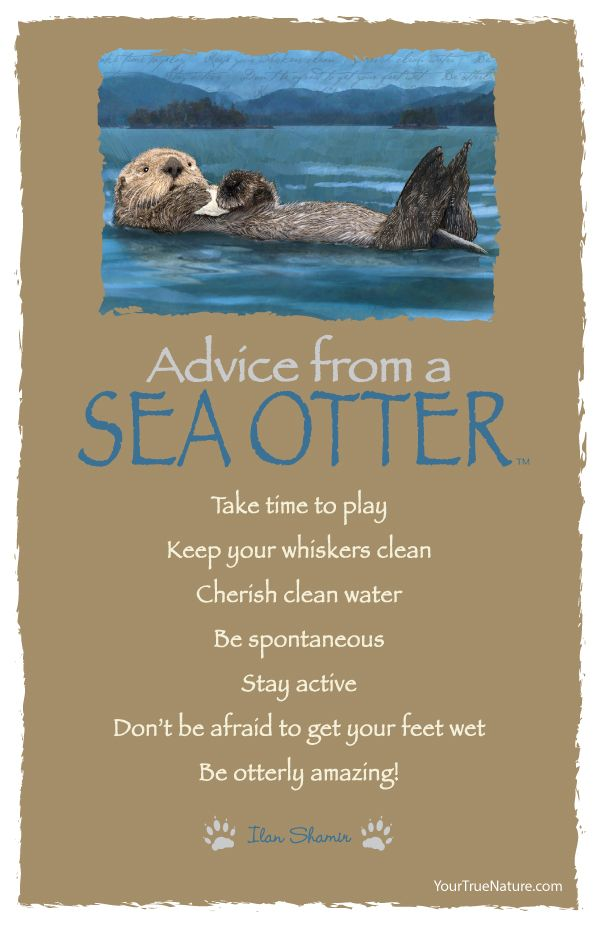 Advice from a Sea Otter - Postcard - Your True Nature