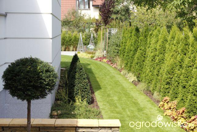 Zimozielony ogród przy białym domu - strona 231 - Forum ogrodnicze - Ogrodowisko