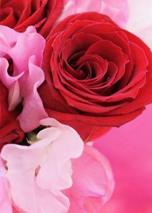 Colors | Red & Pink by kari