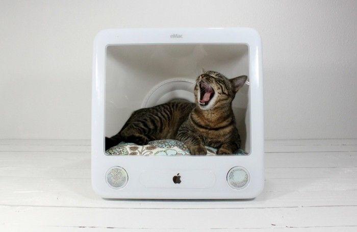 169 besten haustiere bilder auf pinterest. Black Bedroom Furniture Sets. Home Design Ideas