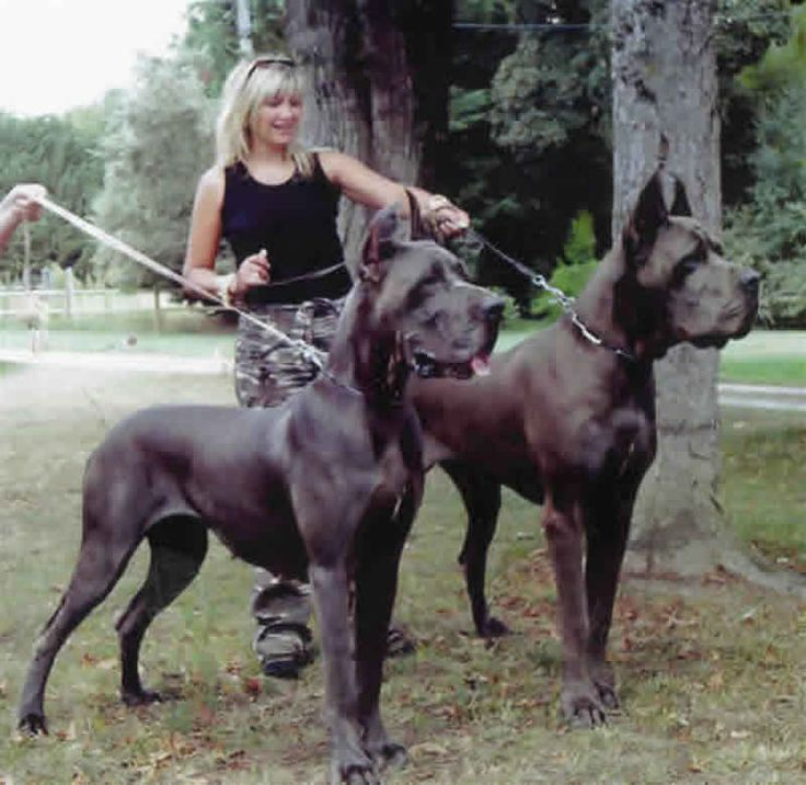Great danes... they really are GREAT