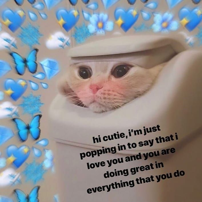 Thankth Trash Can Cat Memes Meme Memes4days Memesdaily Memess Memestgram Mine Epicgames Wholsomememes Cute Love Memes Happy Memes Cute Cat Memes
