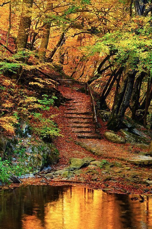 my misty morning  I don't know where this is and all fall is misty.Though this is very picturesque with the stairs and rocks and puddle.