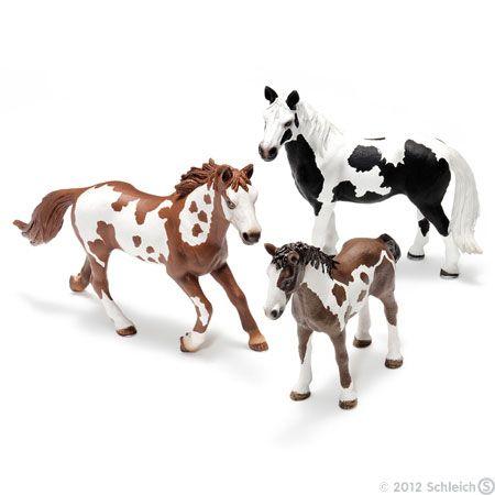 Pinto (Equus ferus)