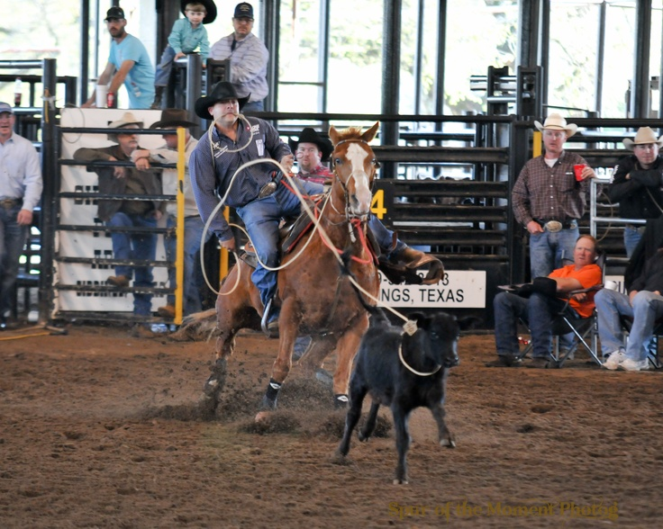 17 Best Images About Tie Down Roping Calf Roping On