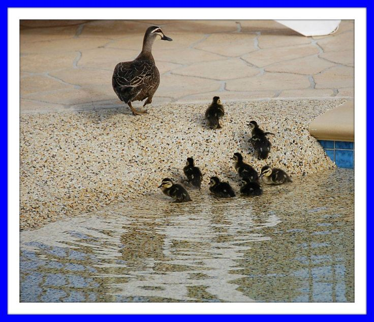 The not so ugly ducklings! #melbournebig4 #visitmelbourne #visitvictoria