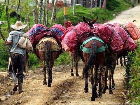 Arrieros y mulas Antioquia