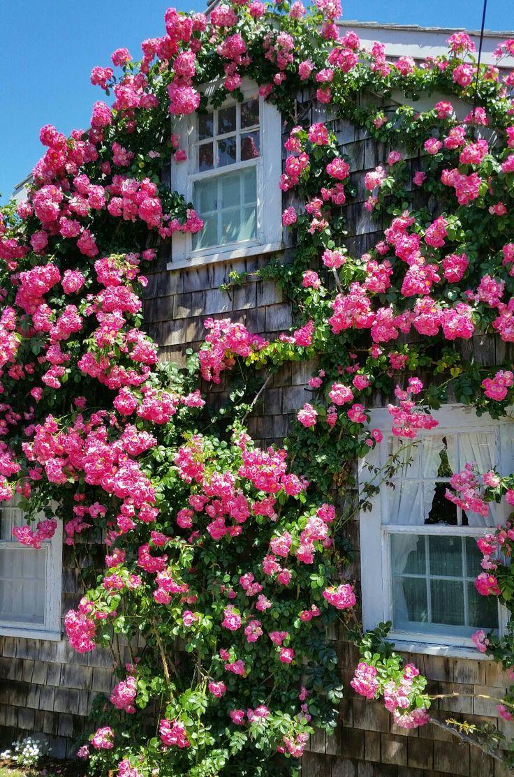 Rose covered cottage