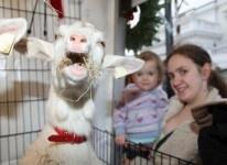 Happy Goat at Cork Christmas Market 2011 - Bothar Charity Activation