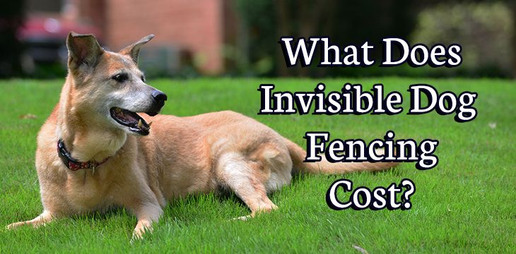 invisible fencing cost