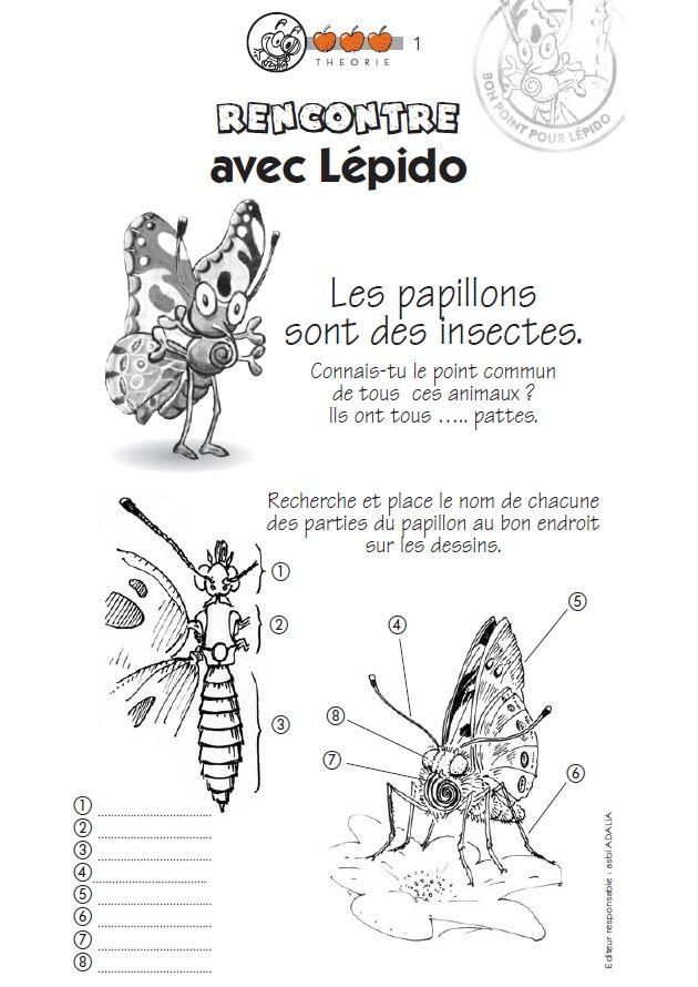 L'�levage de papillons : un fichier �l�ve complet pour chaque cycle avec des jeux, des exercices, des documentaires et des illustrations pour �tudier les papillons et les insectes pollinisateurs.