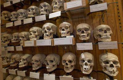 ribuan tengkorak syuhada muslim aljazair di museum paris  sejarah