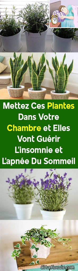 Mettez Ces Plantes Dans Votre Chambre et Elles Vont Guérir L'insomnie et L'apnée Du Sommeil !
