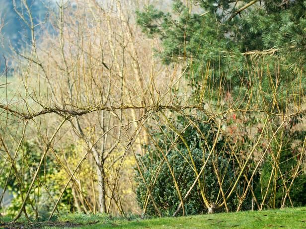 Get step-by-step instructions for creating an attractive willow screen from HGTV.com.